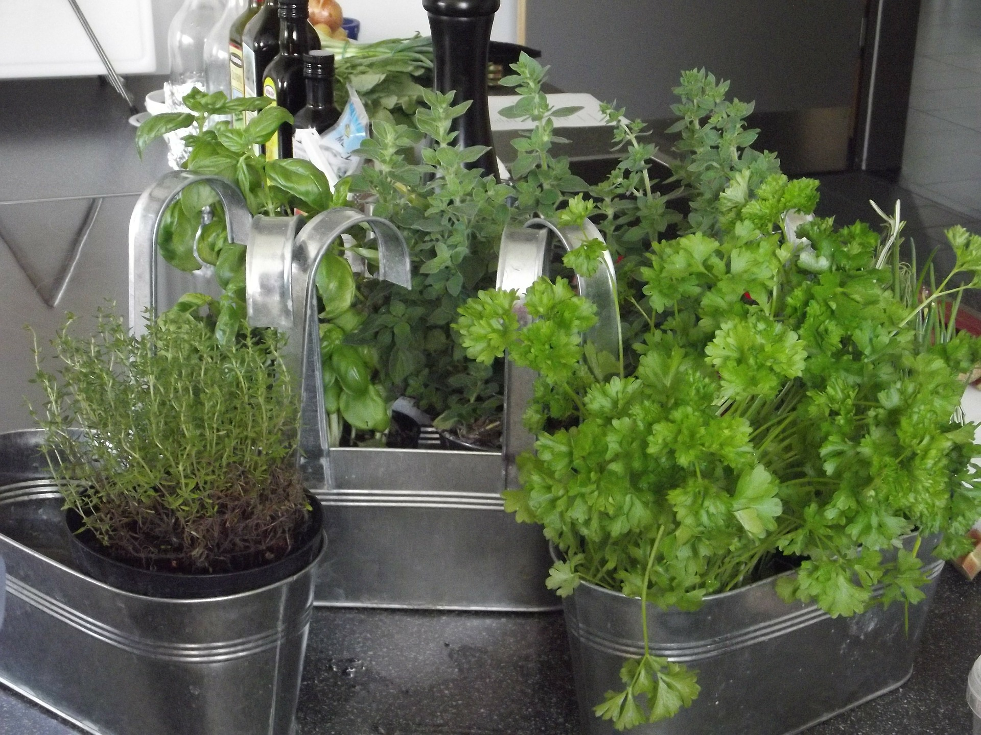 Growing herbs – Backyard gardening