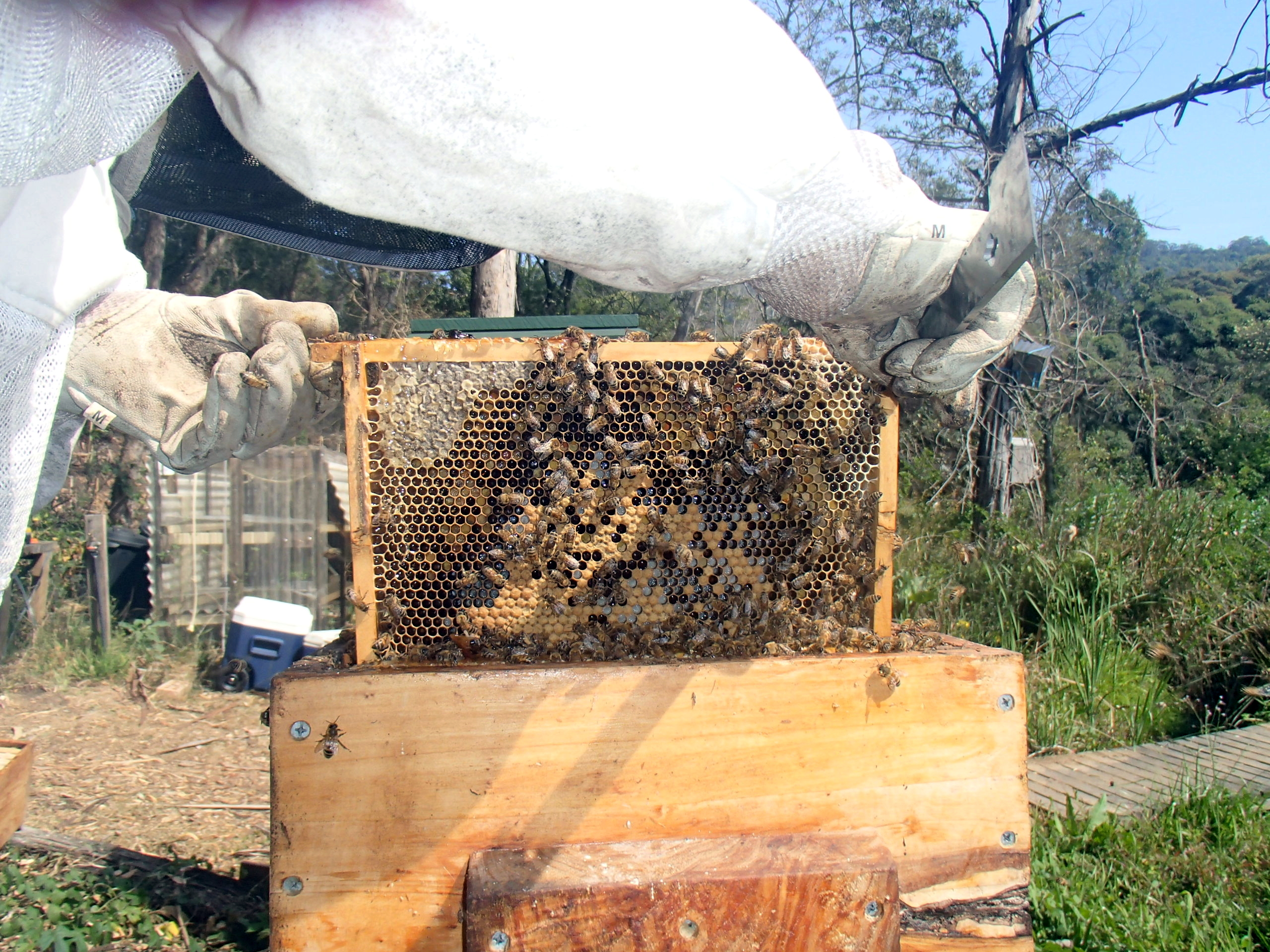 Backyard beekeeping and bees with a personality