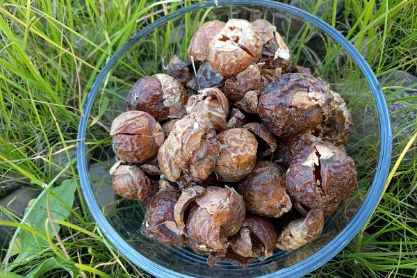 Soapnuts and how to use them